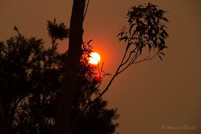Bushfires in NSW, Australia. December 2019