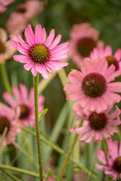 KoRedfield-Floral16.jpg