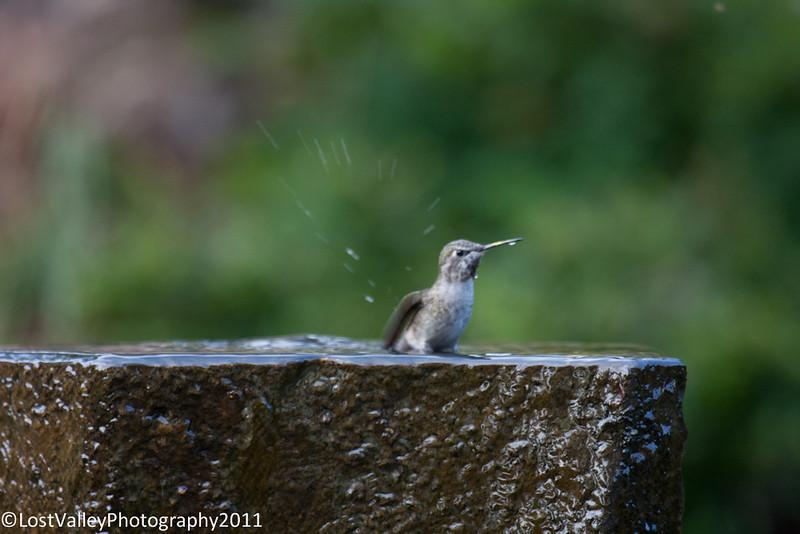 Birds and Fountain-2957.jpg