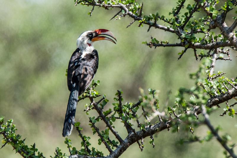 Samburu (39 of 70).jpg