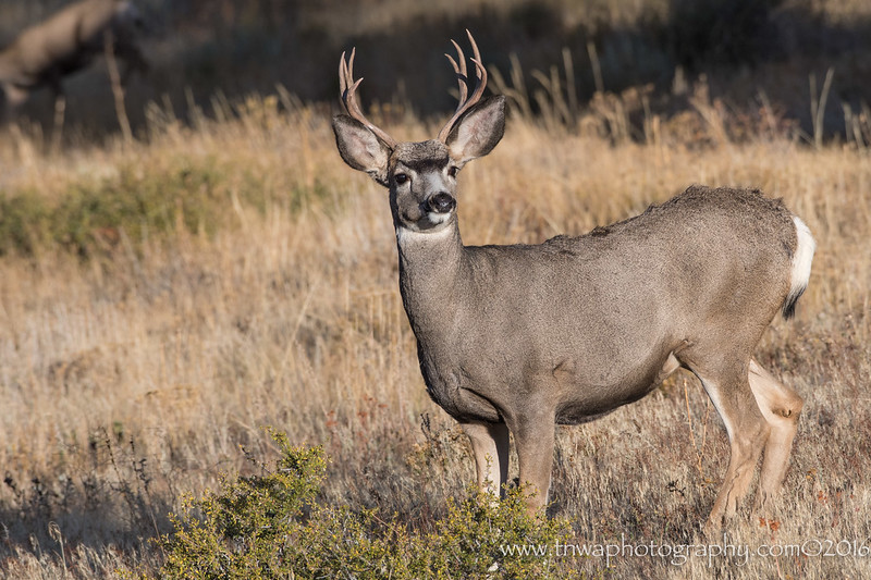 It's Not Just Elk In Rocky Mountain National Park