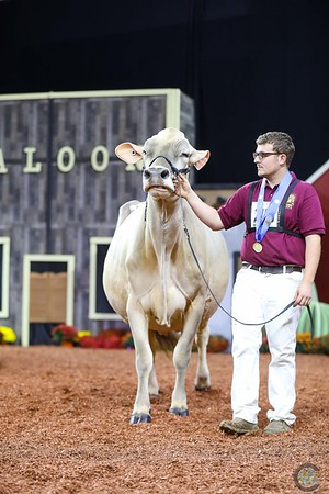 WDE Brown Swiss Senior Cows 2018