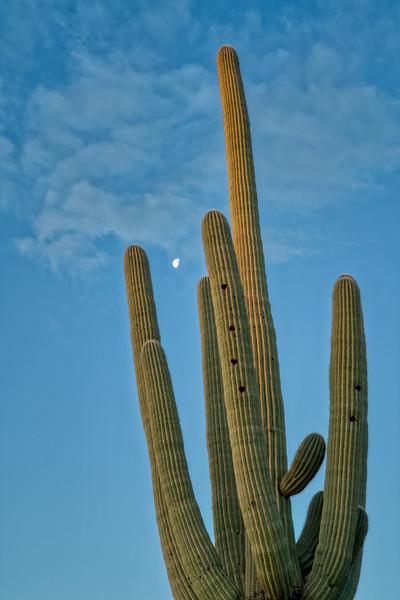 Saguaro NP 2020-6.jpg