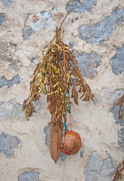 soy beans and gourds on a wall