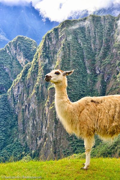 06.20_Machu Picchu-7678.jpg