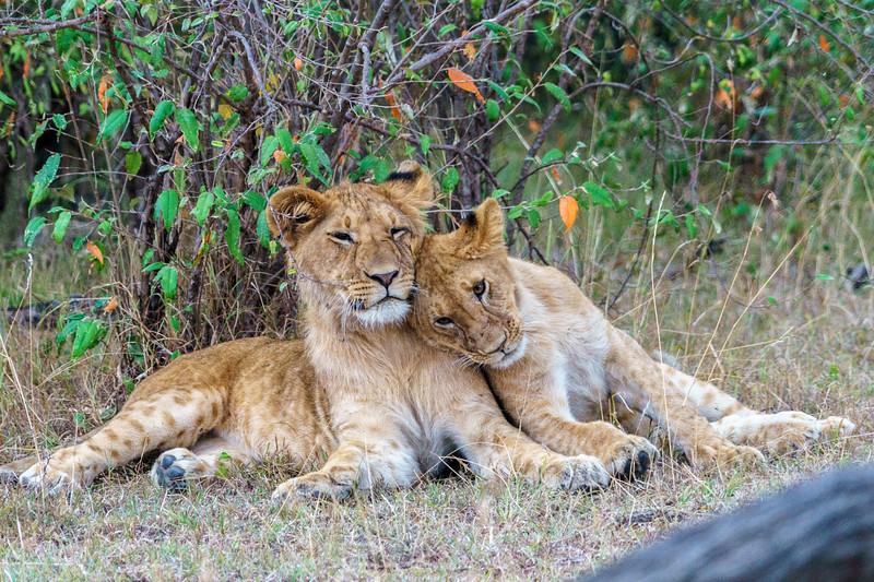 Kenya 2015-10028.jpg