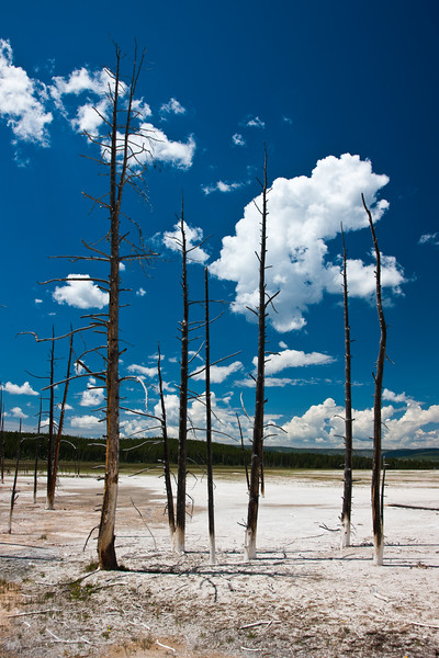 Dead Trees 0709.jpg