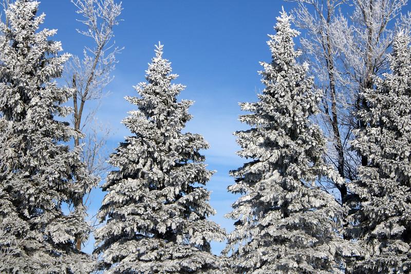 Winter Wonders 17.jpg