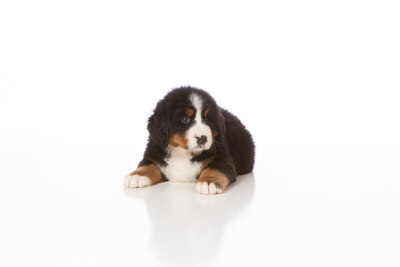 2013-Pearson Pups-Jun02-0252.jpg