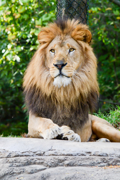 Lionsec6-0669.jpg