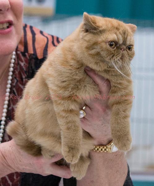 CatShow2014177.jpg