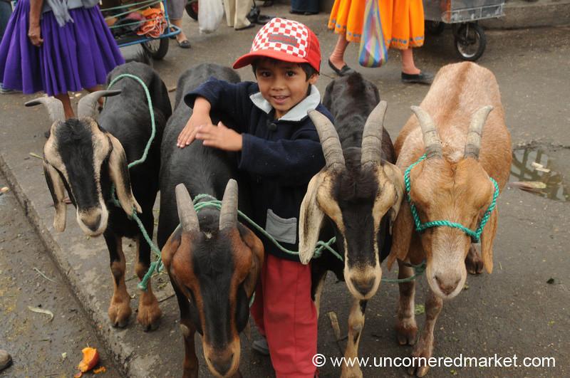 A Boy and His Goats - Cuenca, Ecuador