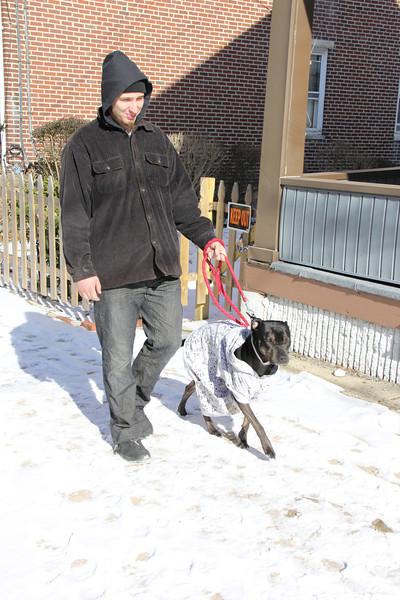 Keep Pets Inside Story, Coaldale, Tamaqua (1-27-2013)