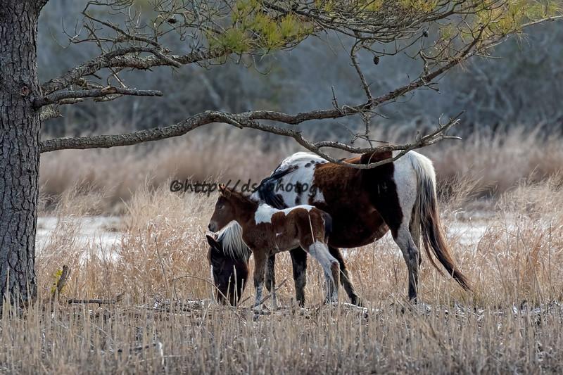 2021 Foals
