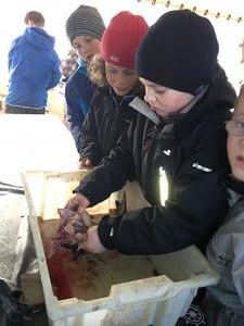 Juniorgruppen: Fisketur med Rover