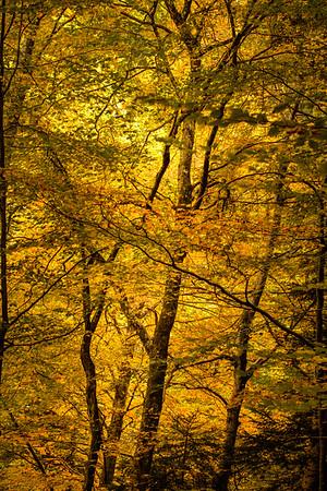 Un regard sur les arbres