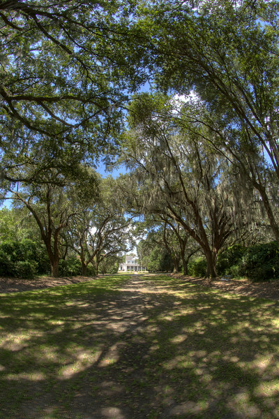 A shaded alley leading to the Legare-Waring House at Charles Towne Landing State Historic Park in Charleston, SC on Wednesday, September 3, 2014. Copyright 2014 Jason Barnette