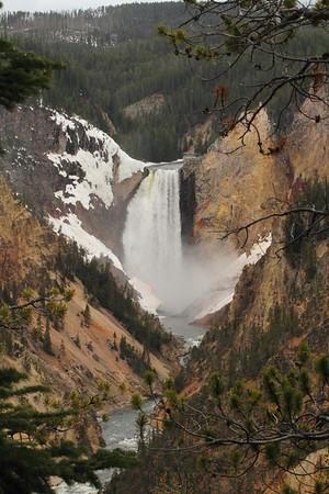 Yellowstone-Tetons May 2010