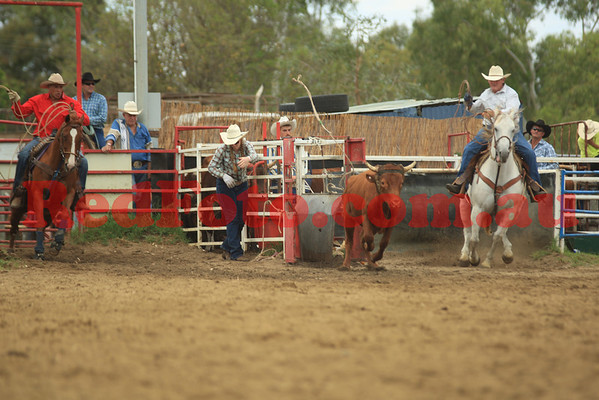 2012 12 31 New Years Rodeo Stampede Arena Roping