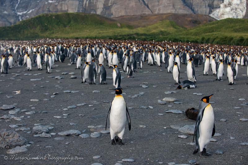 Antarctic-95