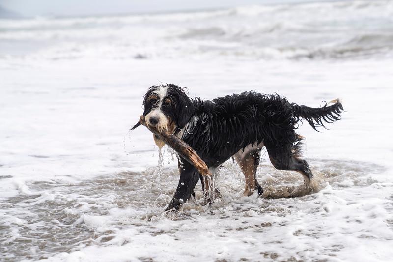 ocean beach quarantine 1230855-30-20.jpg