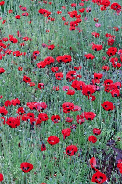 London_2006_098.jpg