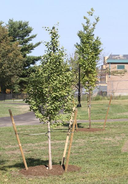 South Common park improvements 091217