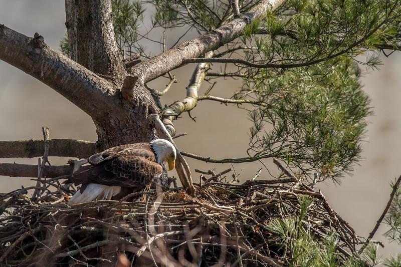 ulster-eagle-49.jpg