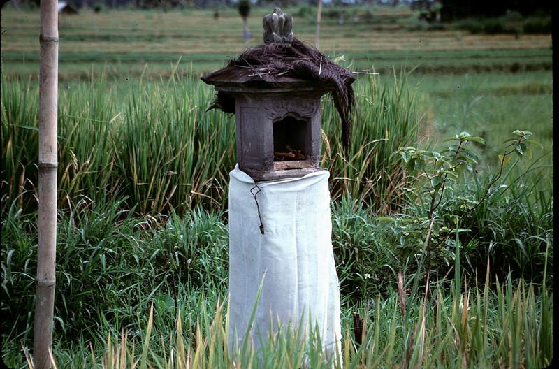 shrine in paddy field