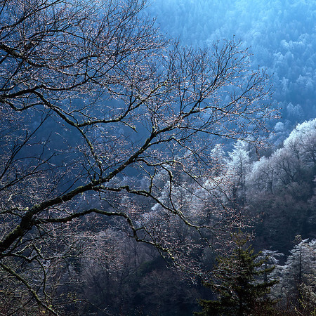 <b>FIRST PRIZE</b> An early morning in spring Great Smoky Mountain National Park submitted by: Ting-Li Lin from Taiwan