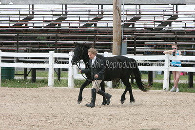 Pony and Mini Halter
