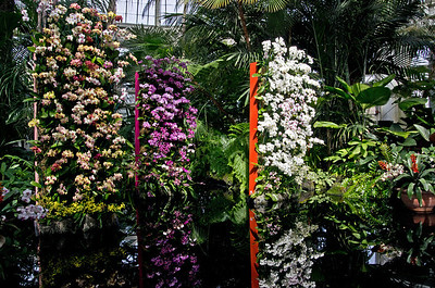 NYBG Orchid show 2014