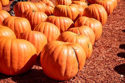 Burts Pumpkin Farm - October 2019