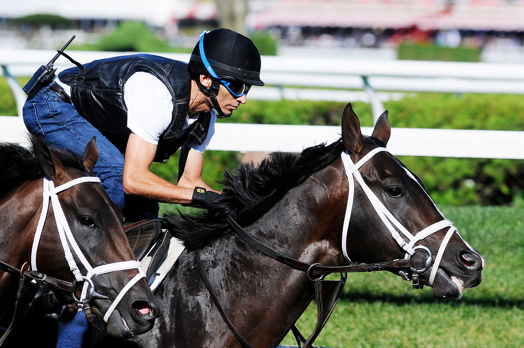 . Johnny Velazquez breezed Verrazano on Saratoga Race Course Sunday morning, trained by Todd Pletcher, set to run in Travers Stakes.Photo Erica Miller/The Saratogian 8/11/13 spt_Verrazano3