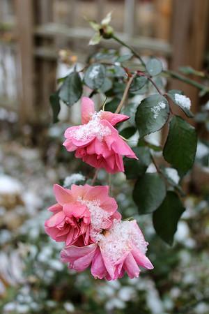 First Snow - 2014