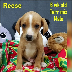 2019 Rescued Puppies