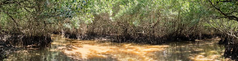 Everglades-57-Pano i9.jpg