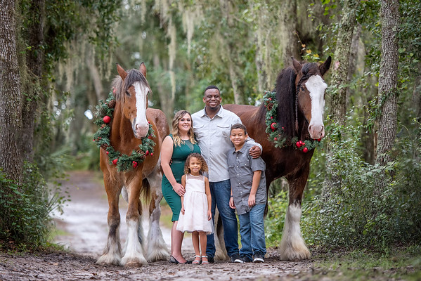 Clydesdales October 2019 - Rymer