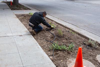 Landscape planting 2018