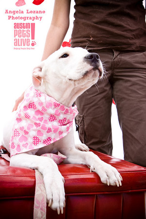 Sweet Barks 2011
