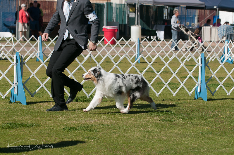 20170205_Australian Shepherds_Lost Dutchman Kennel Club-89.jpg