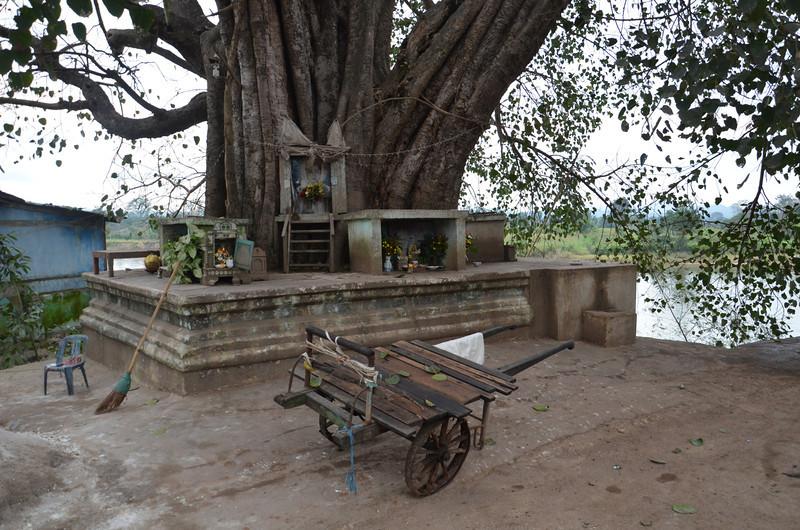 DSC_4795-banyan-tree-nat-shrine.JPG