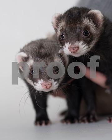 2016 December Small Animal Gallery