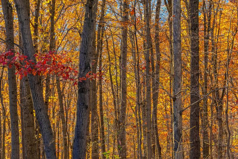 West Virginia Fall Colors Two.jpg
