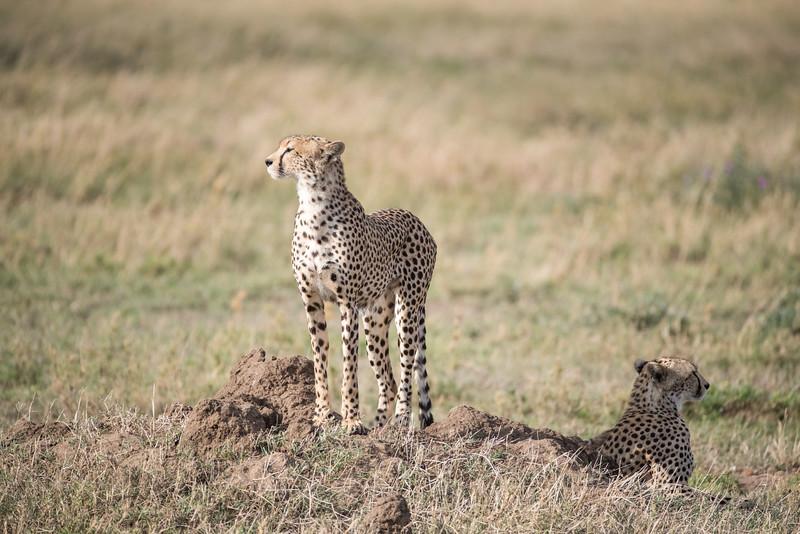 Africa - 101616 - 5726.jpg