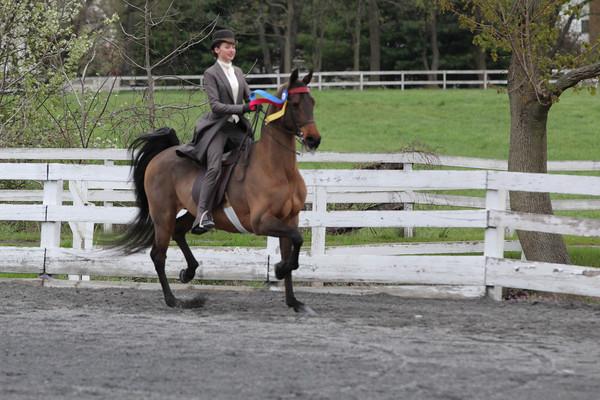 072 Saddle Seat Equitation 17 & Under Championship