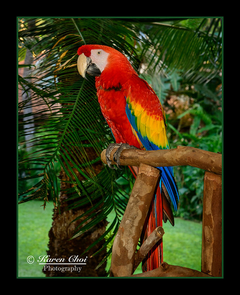 z sm red parrot 2.jpg