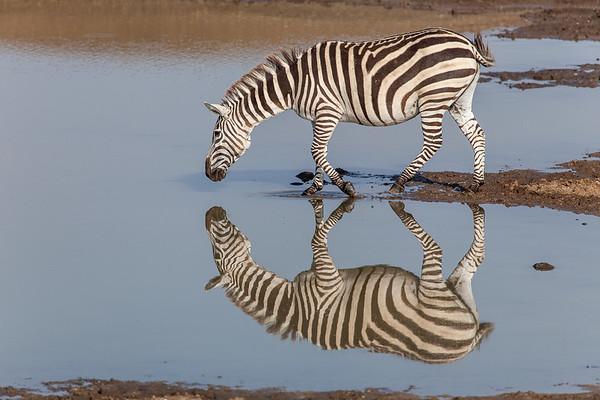 Kenya Safari 2016