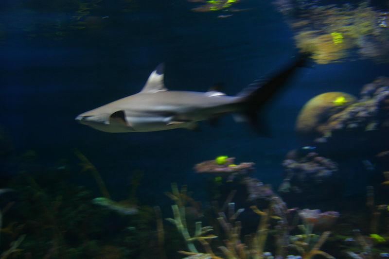 Seattle_Aquarium_26aug04 011.jpg