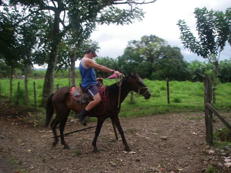 CowboyWCows.JPG